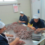 anchovy production